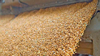 grain loading case study