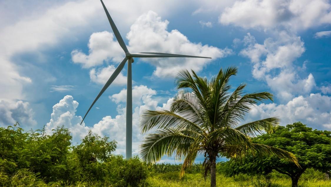 Windturbine neben Palmen
