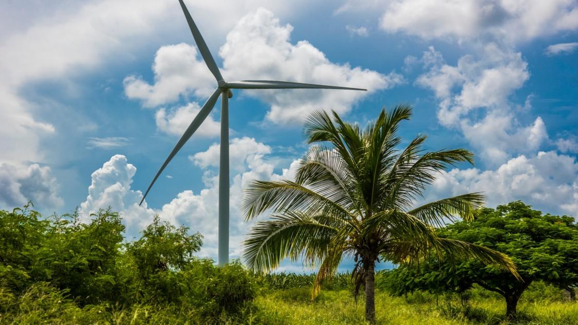 wind turbine in-between palms
