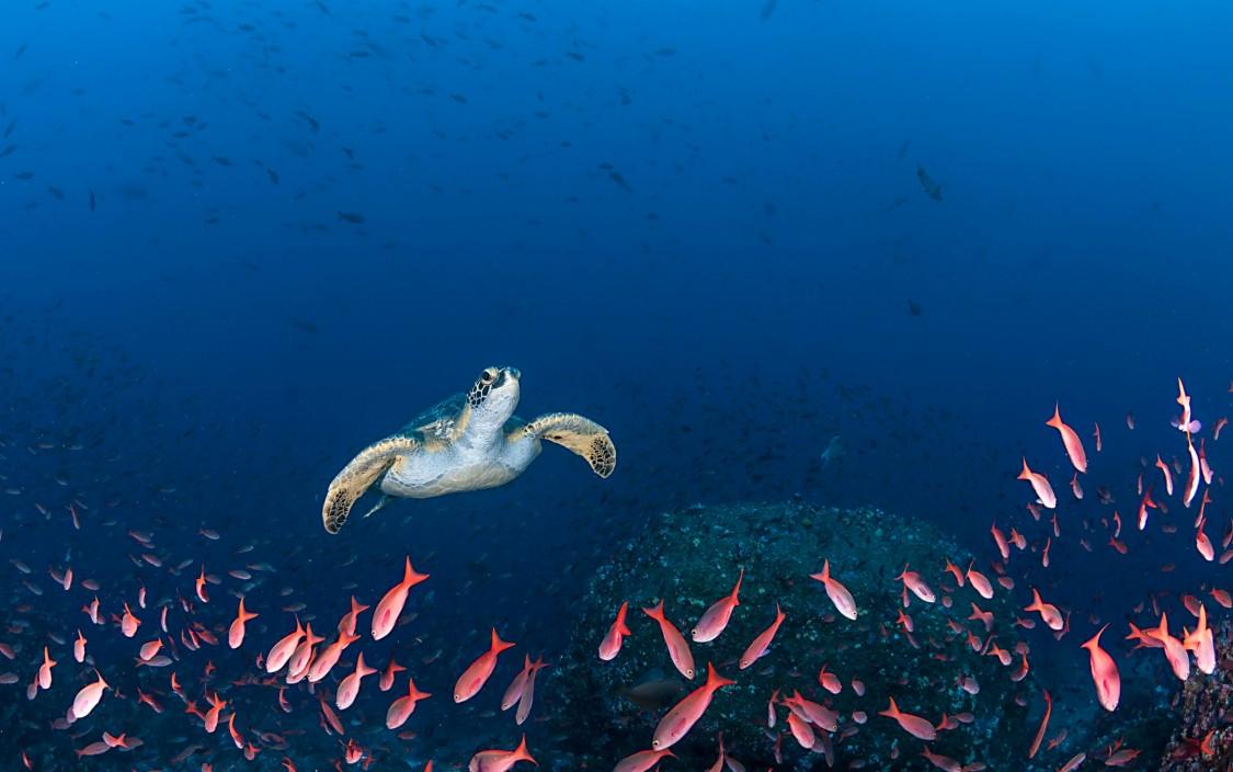 tortuga bajo el mar