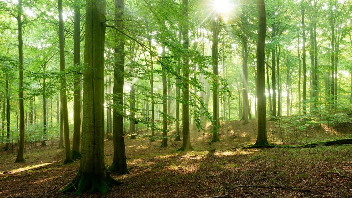 Aplinkos apsauga