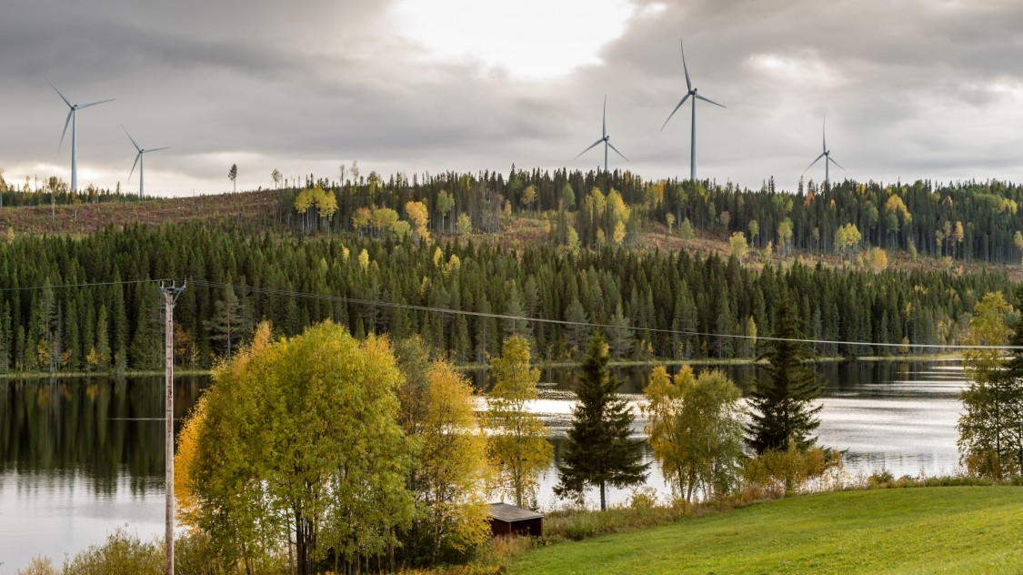 Onshore wind park in a forest area