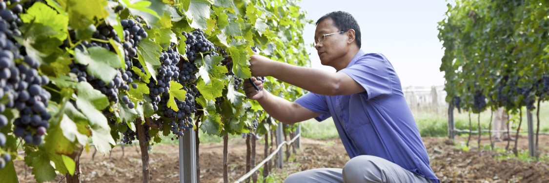 Enhancing the winemaking process from the soil to the bottle