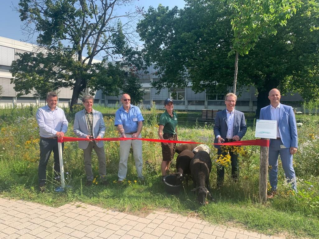 Schafe Karlsruhe : Eröffnung Wiese