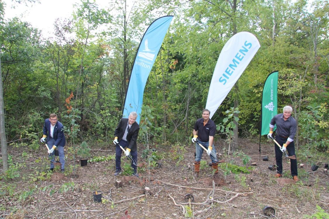 Siemens volunteers planting trees