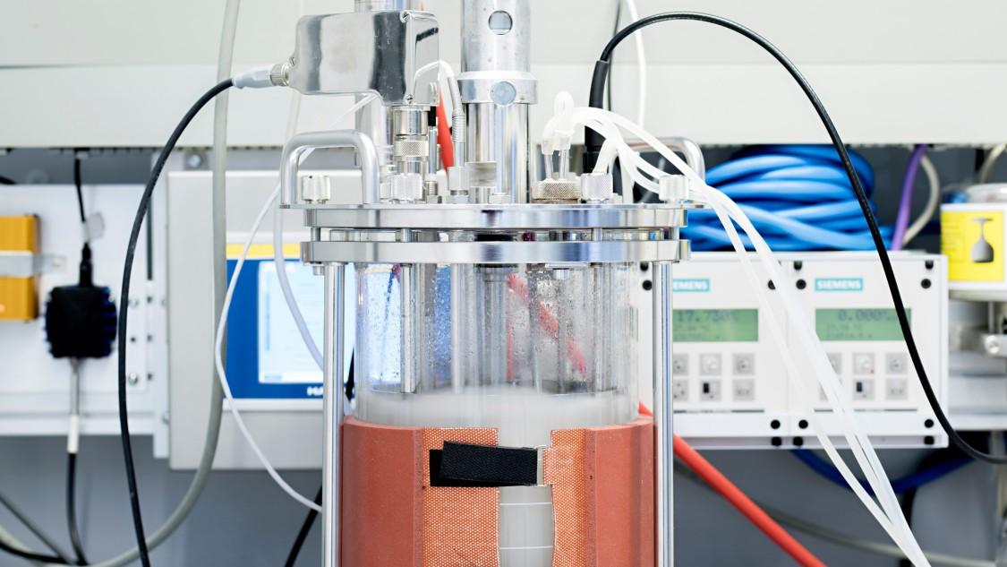 Im Bioreaktor werden Musterorganismen wie Hefen und Laktobazillen fermentiert.