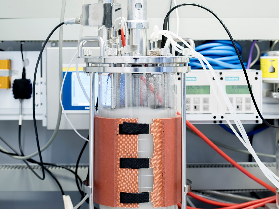 Sample organisms such as yeasts and lactobacilli are fermented in the bioreactor.