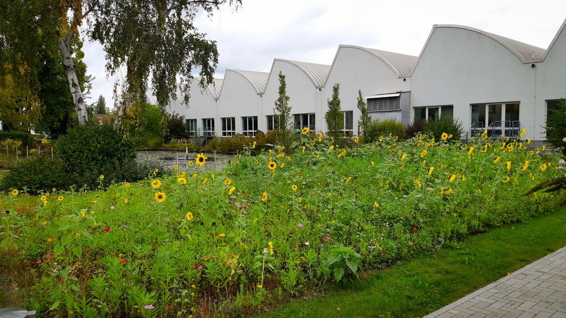 A Wildflower Meadow in Braunschweig Fosters Biodiversity