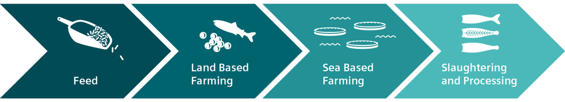 Aquaculture value chain