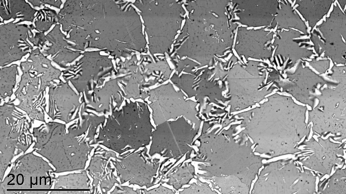 SEM image of a 3D-printed material: The easily visible white grain boundaries significantly influence the material properties.
