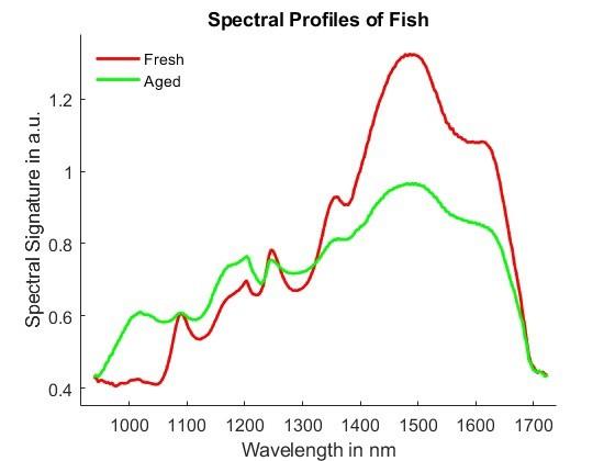 Die Hyperspektralanalyse zeigt deutliche Unterschiede zwischen frischem Fisch und fünf Tage altem Fisch.
