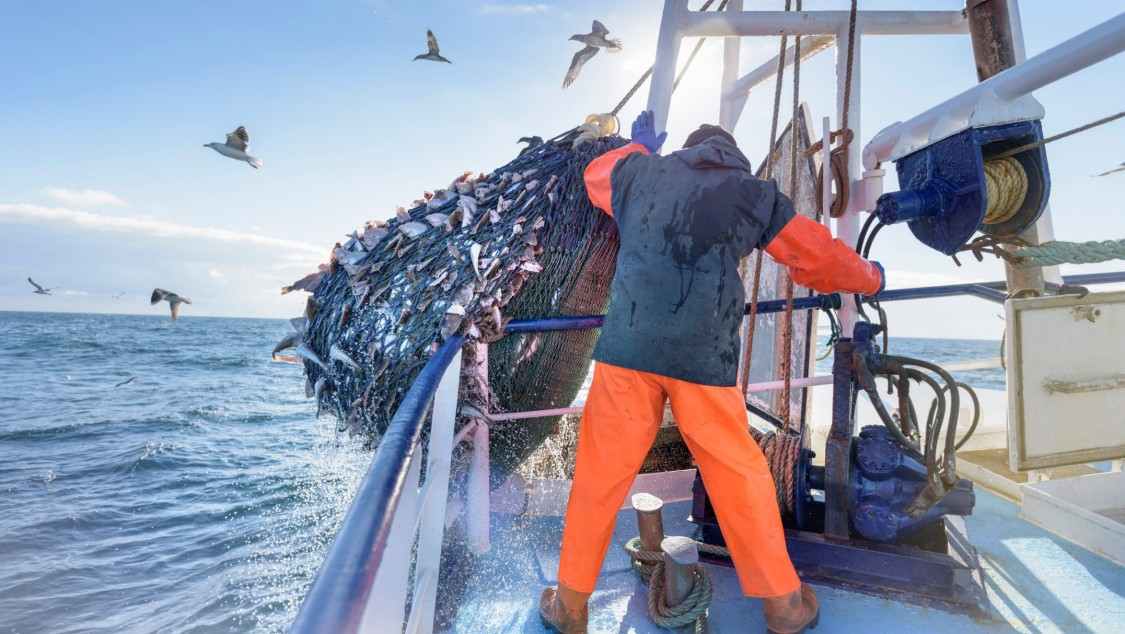 produktkvalitet fiskfoder