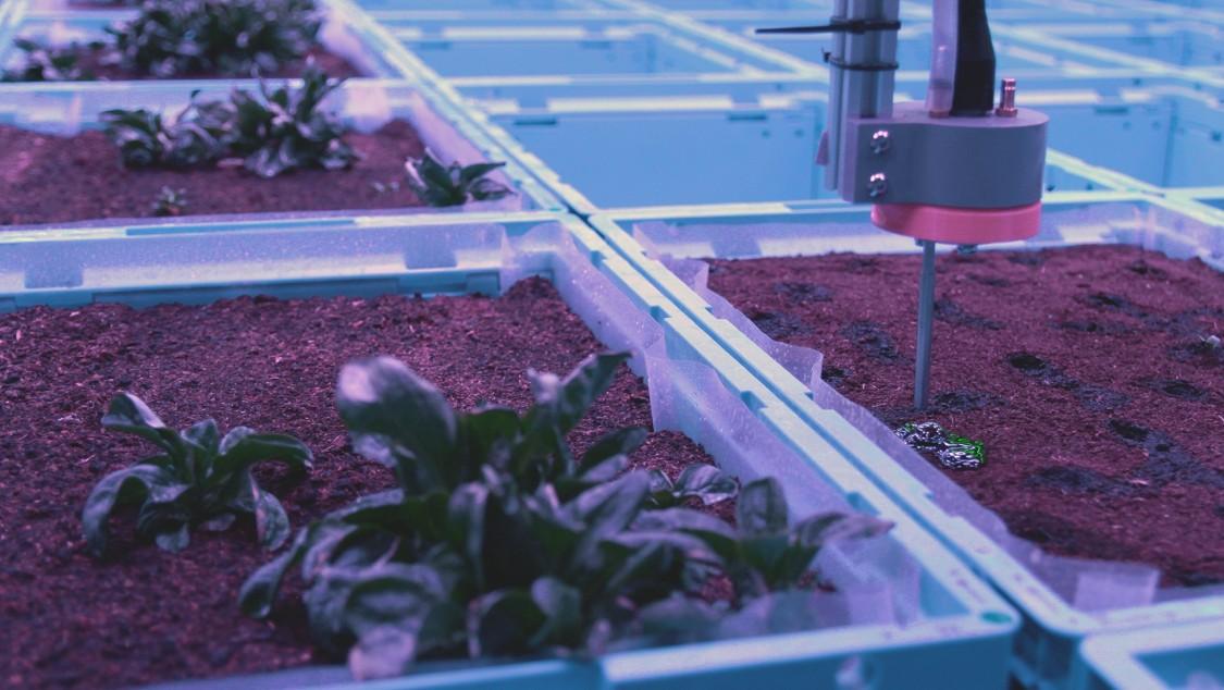 Ein Roboter pflanzt und pflegt verschiedene Gemüsesorten