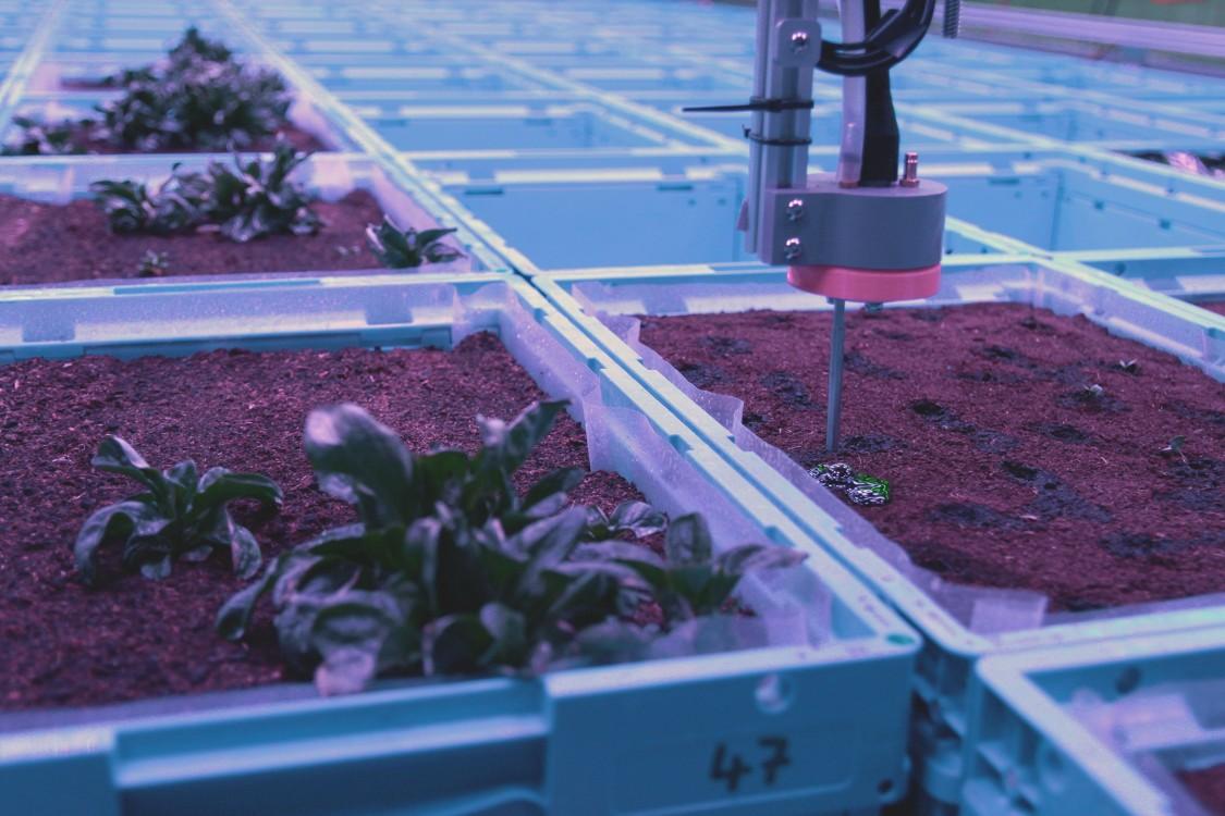 Im digitalen Indoor-Garten von Siemens versorgt ein autonomer Gartenbauroboter das Gemüse.