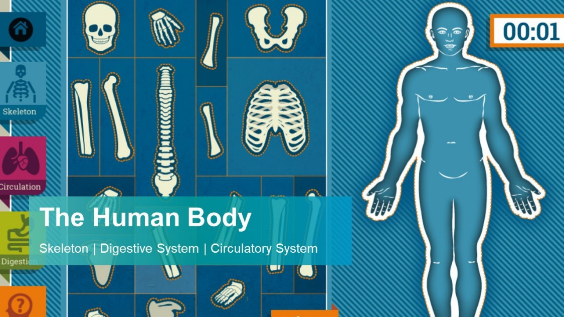 The Human Body Interactive Game. Skeleton. Digestive System. Circulatory System.