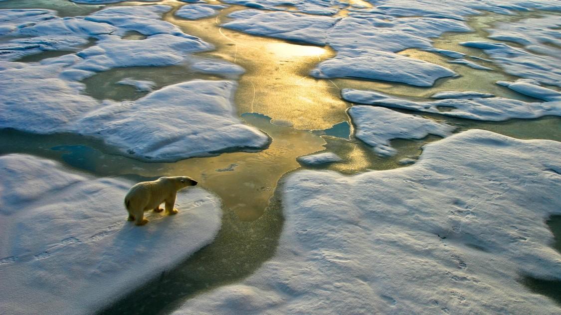 Ein Eisbär zwischen Eisschollen, die Sonne spiegelt sich im Wasser