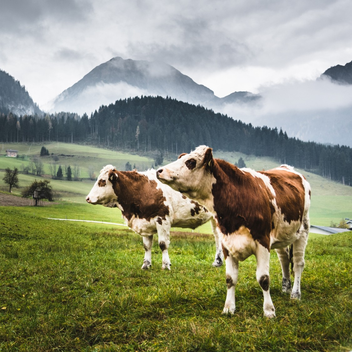 The digitalization of livestock farming promises higher yields and increased sustainability