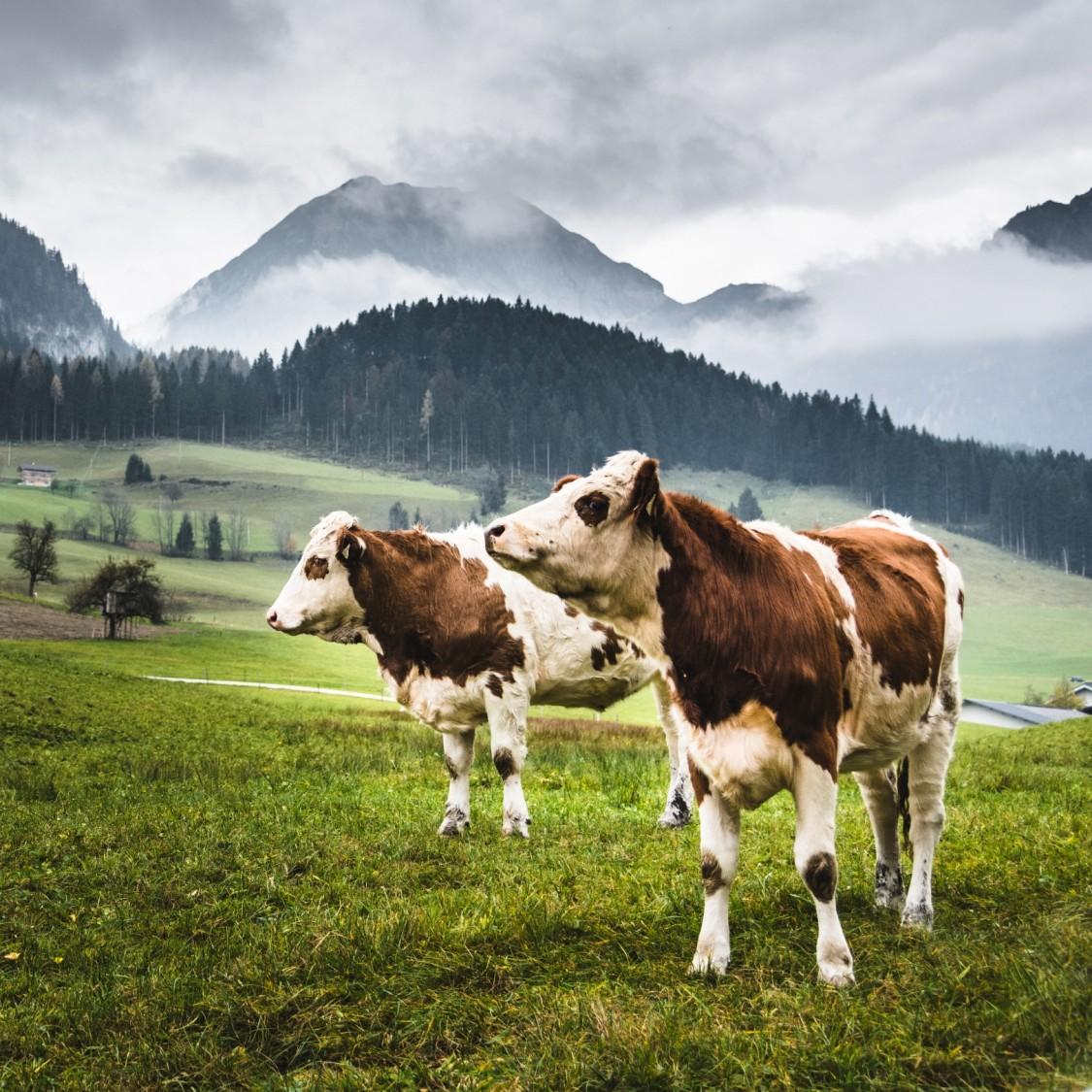 Die Digitalisierung der Nutztierhaltung verspricht höhere Erträge und mehr Nachhaltigkeit