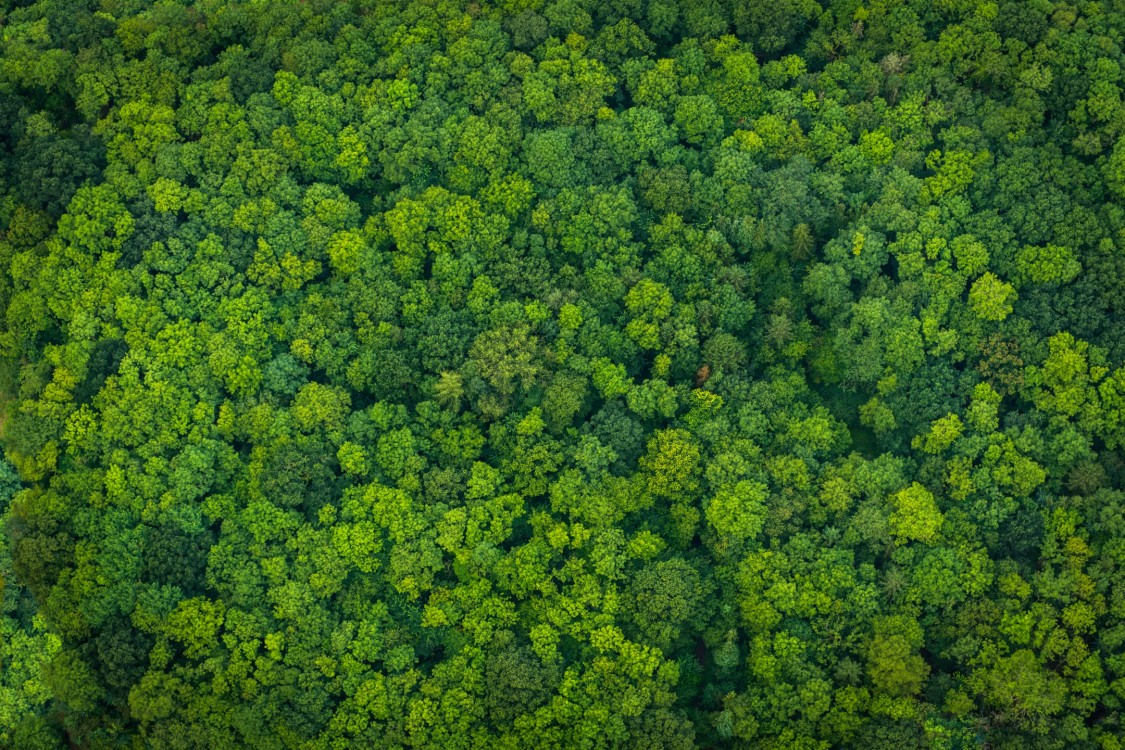 Green forest ariel view