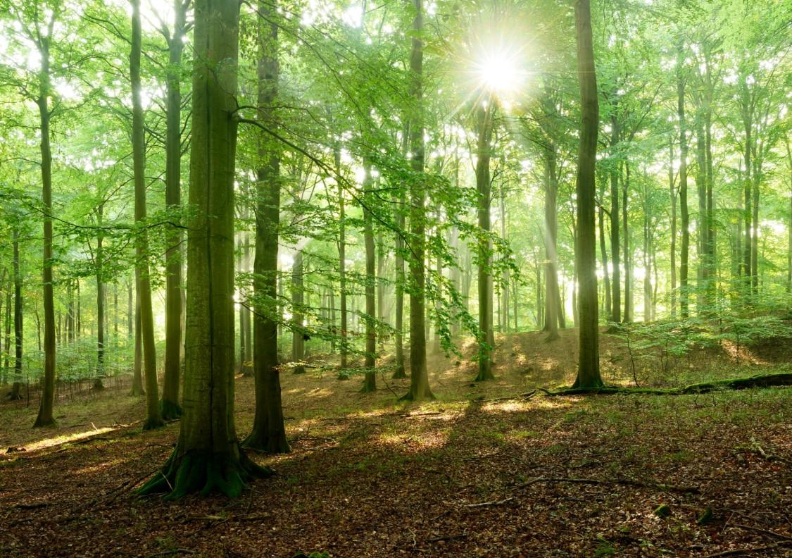 Siemens goes carbon neutral