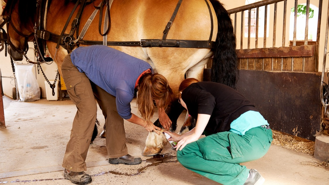 vet and owner looking at horse's hoof
