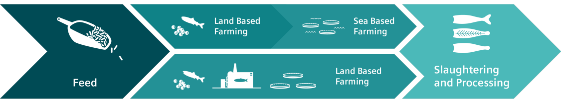 Aquaculture value chain