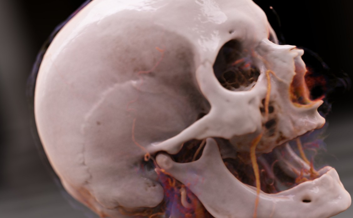 A Journey Inside the Human Body