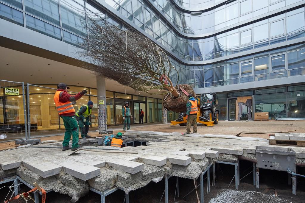 Start der Innenhof-Bepflanzung in neuer Siemens-Konzernzentrale