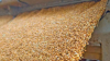 grain loading case study - USA