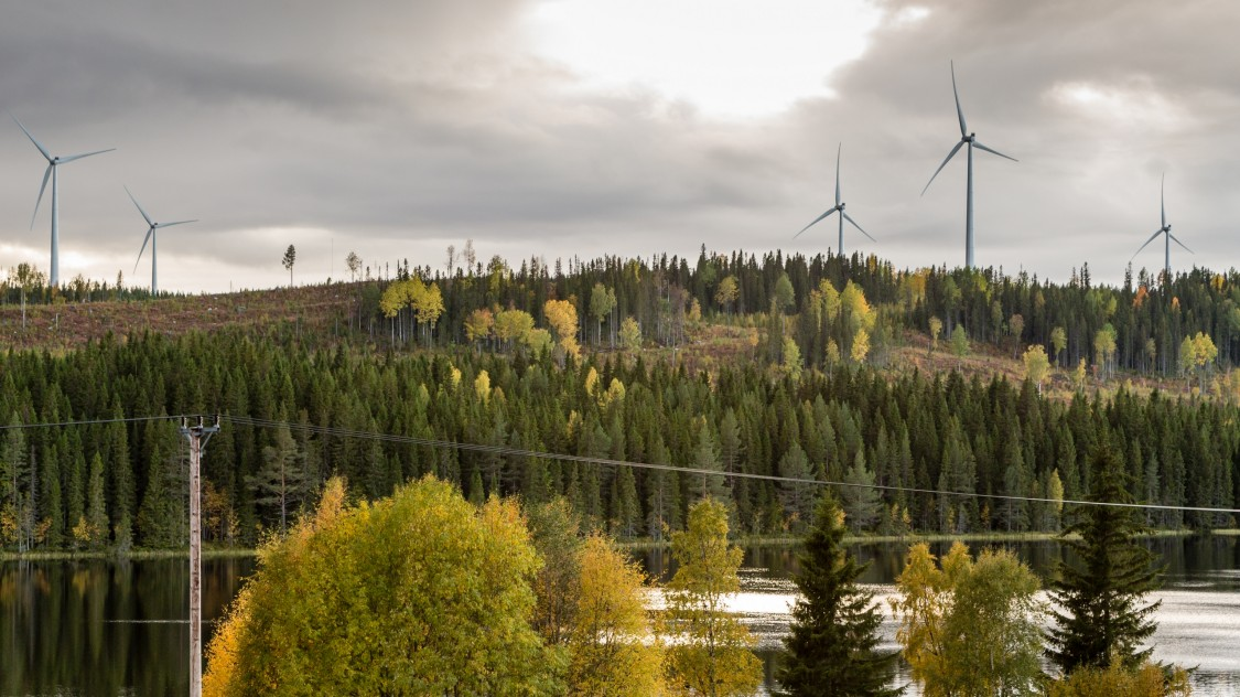 Onshore wind farm in the forest