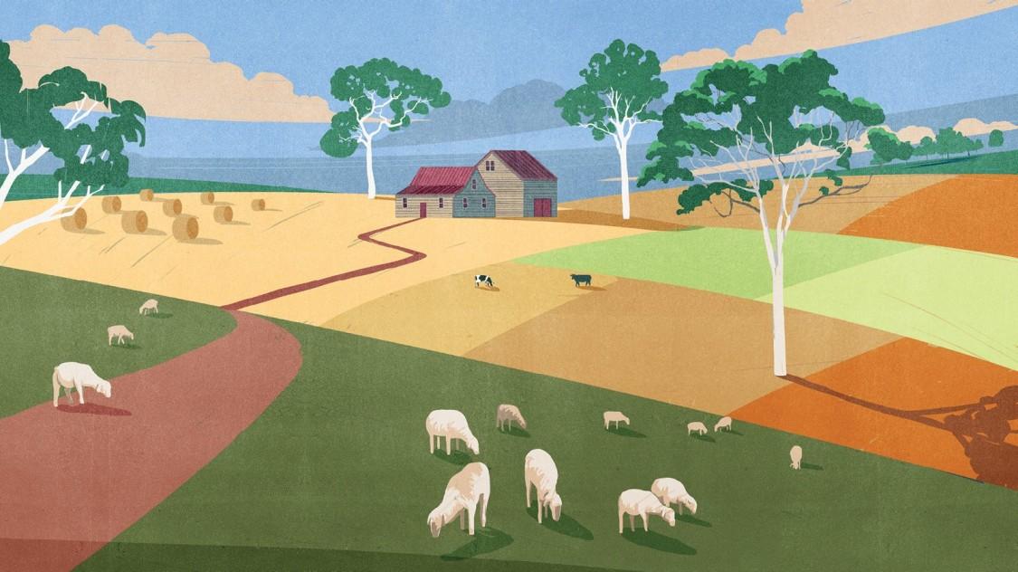 Why this environmentalist left the sheep farm