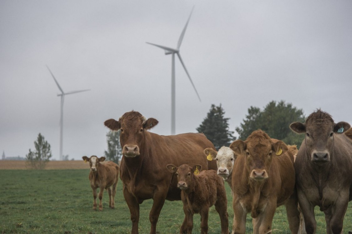 Защита нашего скота  и нас самих от вредных бактерий