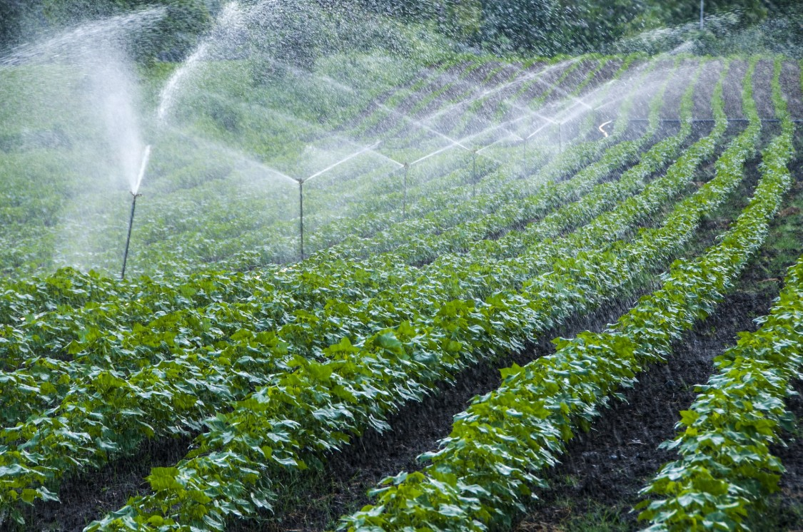 USA | irrigation