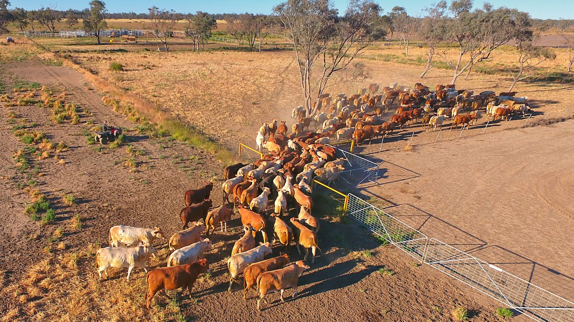 Australian farmers battle drought