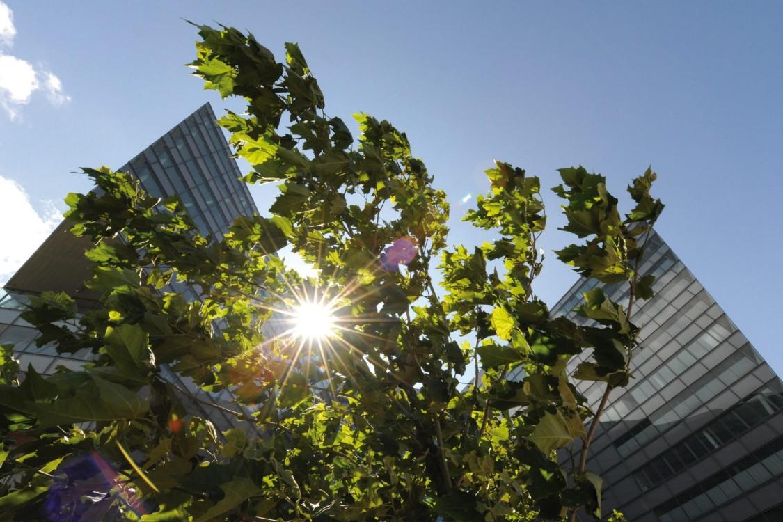 CO2-neutraler Geschäftsbetrieb bis 2030