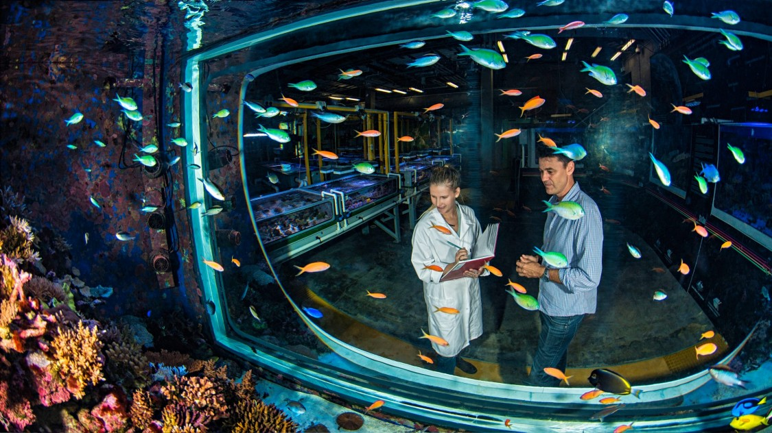 View from the inside of an enormous aquarium in which schools of colorful fish are swimming. A woman and a man stand in front of the aquarium and observe the contents.